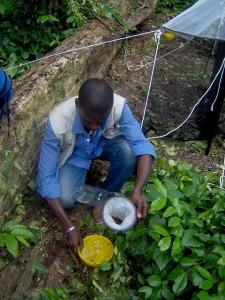 Pose de pièges et récolte de braconides et d'apoïdes dans les forêts sacrées du Sud-Bénin