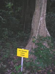 Aménagement d'une forêt pour l'écotourisme